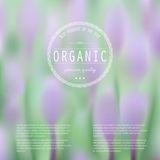 Elegant blurred illustration with spring flowers Royalty Free Stock Images