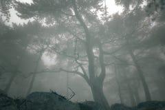 Elegant bos met mist Royalty-vrije Stock Afbeelding