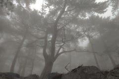Elegant bos met mist Stock Foto