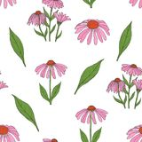 Elegant botanical seamless pattern with gorgeous echinacea flowers, stalks and leaves on white background. Flowering Royalty Free Stock Images