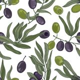 Elegant botanical seamless pattern with olive tree branches with leaves, black and green ripe fruits or drupes on white. Background. Colorful hand drawn vector vector illustration
