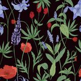 Elegant botanisch naadloos patroon met wilde bloemen en kruiden op zwarte achtergrond - gebiedspapavers, lupine, grote burnet Stock Fotografie