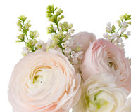 Elegant bouquet Royalty Free Stock Photography