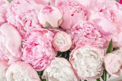 Elegant bouquet of a lot of peonies of pink color close up. Beautiful flower for any holiday. Lots of pretty and. Romantic flowers in floral shop Stock Images