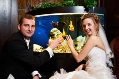 Elegant bride and groom about the aquarium Stock Photos