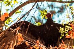 Elegant buzzard in tree Stock Photos