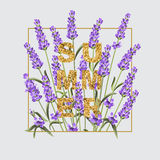 Elegant card with lavender flowers. Royalty Free Stock Image