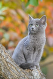 Elegant cat. Autumn background. Cat peering out of a tree. autumn background Stock Photo