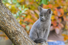 Elegant cat. Autumn background. Cat on a tree looking down. Autumn background Stock Images