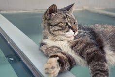 Elegant Cat 4 Stock Images