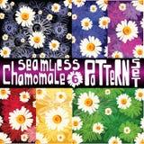 Elegant chamomile pattern set with six seamless patterns Stock Photo