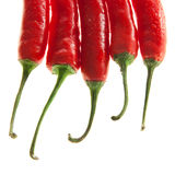 Elegant chilli peppers. Chili peppers isolated on white background Royalty Free Stock Photography