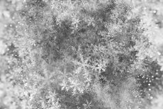 Elegant Christmas background with snowflakes fractal texture. Black and white, computer generated abstract background, 3D rendering Royalty Free Illustration