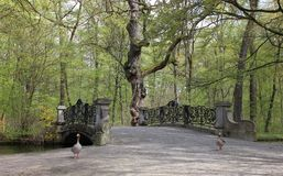 Elegant classical bridge in the park with two gooses Royalty Free Stock Photography