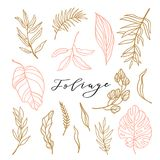 Elegant collection of foliage for stylish feminine logo or wedding invitation. Set cute leaves. Vector illustration. Elegant collection of foliage for stylish stock illustration