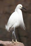 Elegant crane. Standing on rocks royalty free stock photos