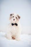 Elegant cute dog wearing a tie dreaming
