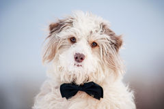 Elegant cute dog wearing a tie - portrait Royalty Free Stock Images