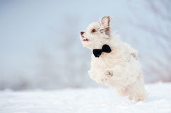 Elegant cute dog wearing a tie running