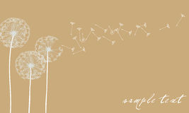 Elegant dandelion background Royalty Free Stock Photos