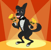 Elegant dog stands on the stage with flowers. Happy dog stands on a brightly lit stage holding flowers Royalty Free Stock Images