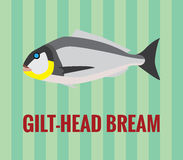 Elegant drawing of a gilt-head bream on green background. Vector stylised drawing of a delicate sea fish gilt-head bream used widely in spanish and italian Stock Photos