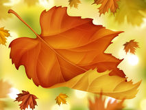 Elegant fall foliage background. Close up autumn maples with bokeh background in 3d illustration Stock Image