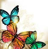 Elegant Fashion background with butterflies Royalty Free Stock Photography