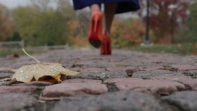 Elegant female legs walking away in autumn park stock video footage