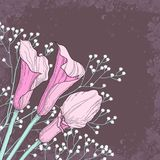 Elegant floral background with calla flowers Royalty Free Stock Photography