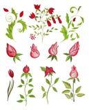 Elegant floral design. Artwork, ink and watercolors on paper Stock Image