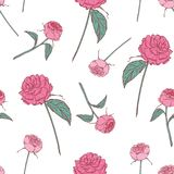 Elegant floral seamless pattern with beautiful roses on white background. Gorgeous backdrop with pink flowers hand drawn vector illustration
