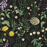 Elegant floral seamless pattern with gorgeous hand drawn wild flowers, tender flowering herbs and herbaceous plants on Stock Image