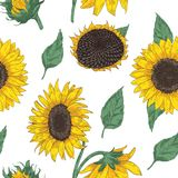 Elegant floral seamless pattern with sunflower parts. Backdrop with beautiful flowers and leaves hand drawn on white. Background. Colored vector illustration in Stock Photo