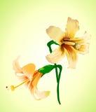 Elegant flower Royalty Free Stock Image