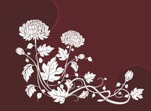 Elegant  flower background with chrysanthemums Royalty Free Stock Photos
