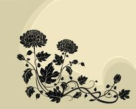 Elegant  flower background with chrysanthemums Stock Photos