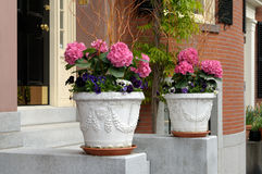 Elegant flower pots framing house entrance Royalty Free Stock Photo