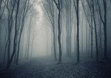 Elegant forest with fog Stock Photography