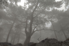 Elegant forest with fog Stock Photo