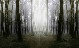 Elegant forest with fog Stock Images