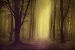 Elegant forest picture with trees and fog Stock Image