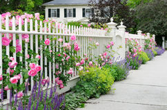 Elegant Garden Fence With Roses. Garden fence and gate with pink roses, speedwell, catmint bordering house entrance Stock Photos