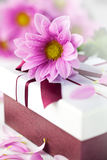 Elegant gift box with daisy Stock Photo