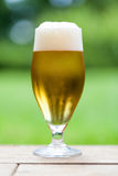 Elegant glass of cold refreshing beer Stock Image
