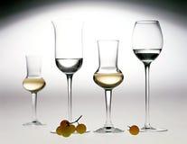 Elegant glasses of grappa Stock Image