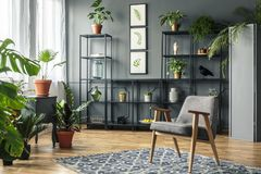 Elegant, gray living room interior with plants on metal racks st stock image
