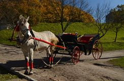 Elegant harnessed horse with a carriage stands on the road against the backdrop of an autumn park with yellow leaves stock photo