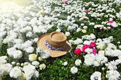 Elegant hat on a sunny day Royalty Free Stock Images