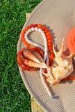 Elegant hatt, pärlemorfärg halsband, pärlor, snäckskal på gräset Arkivbild